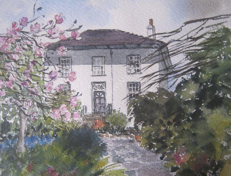 Magnolias in Dad's garden