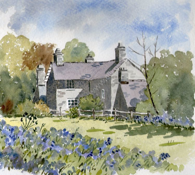 Bluebells at Plas yn Rhiw (sold)