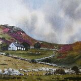 Summer heather in Rhiw (Sold)