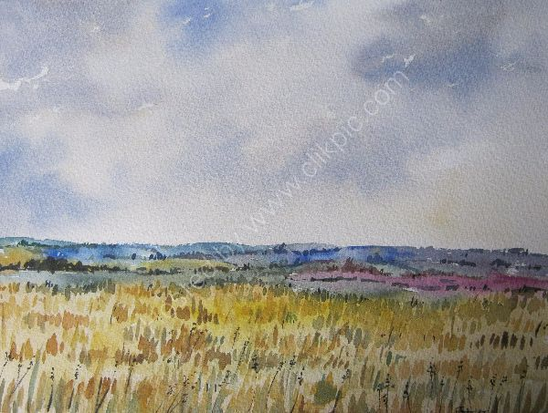 View across Cornfields