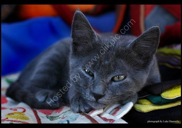 JEDI THE CAT