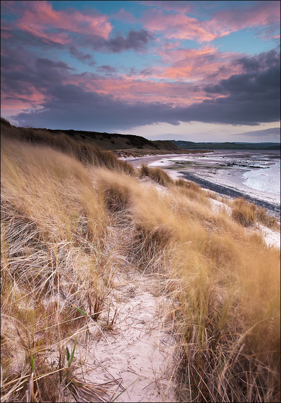 Budle Bay dunes