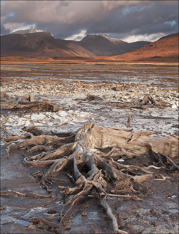 Tree roots at Loch Glascarnoch