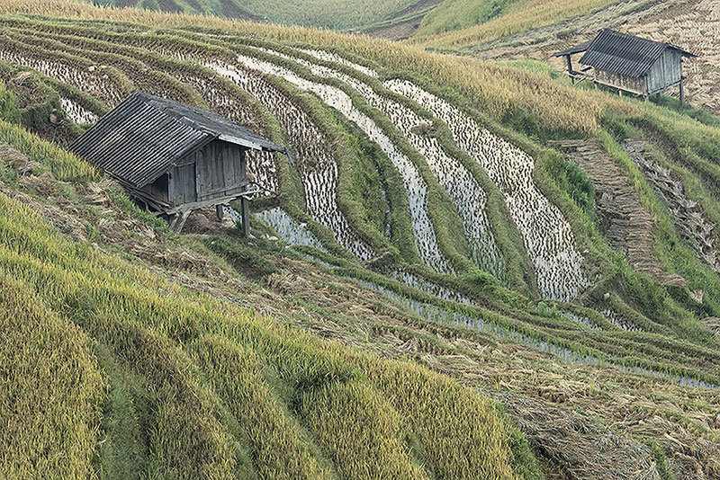 The rice terraces