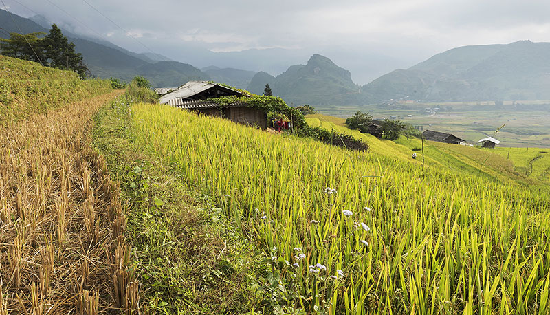 Village in the rice fields