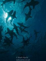 Shark Sky