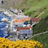 Crovie in Spring