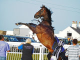 Racehorse rearing up at Les Landes Jersey 2015