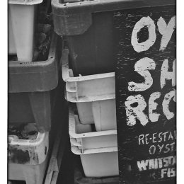 Recycled Oyster Shells.