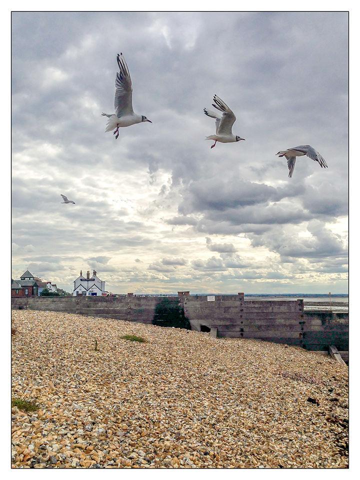 Gulls over the Old Neptune, Whitstable
