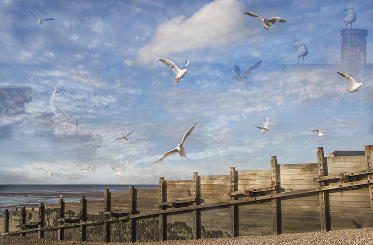 Jons Gulls, Whitstable