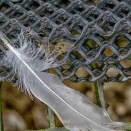 Feather II