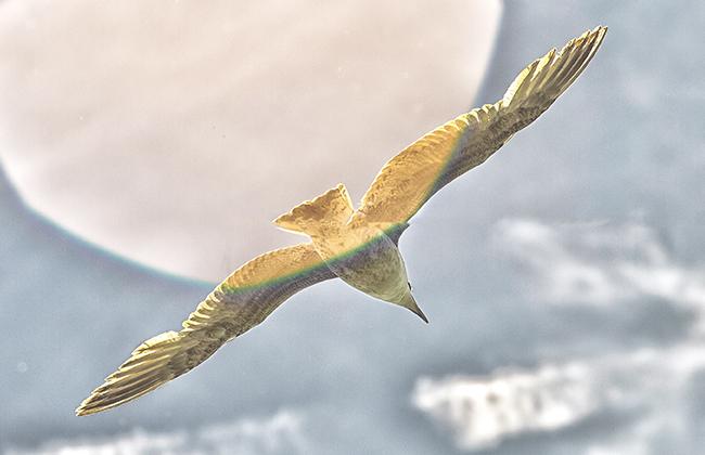 Skybird