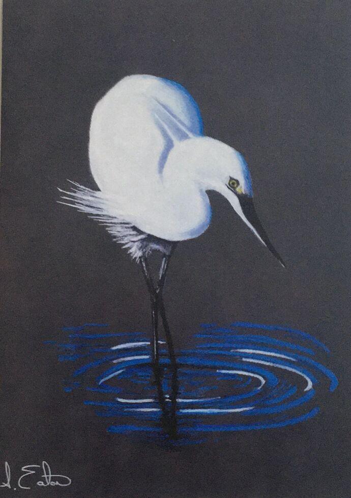 Elegant Egret  Single card £2.50