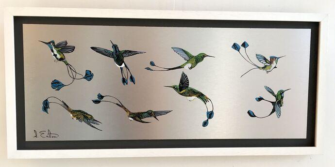 Racket -Tailed Humming Birds