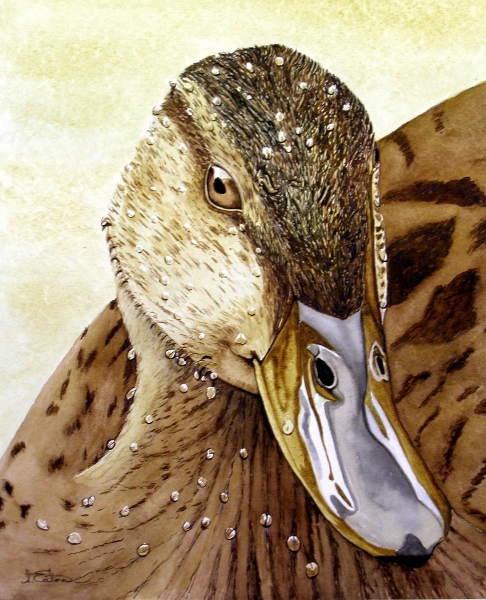 Luvva Duck  watercolour on paper