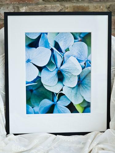 Blue Hydrangea Florets