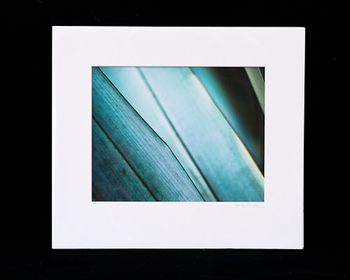 Phormium Abstract