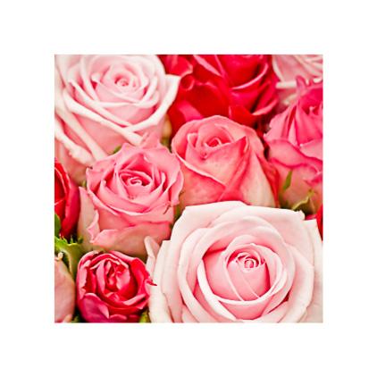 MC.080 Soft pink roses