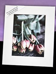 TulipsBench2Text