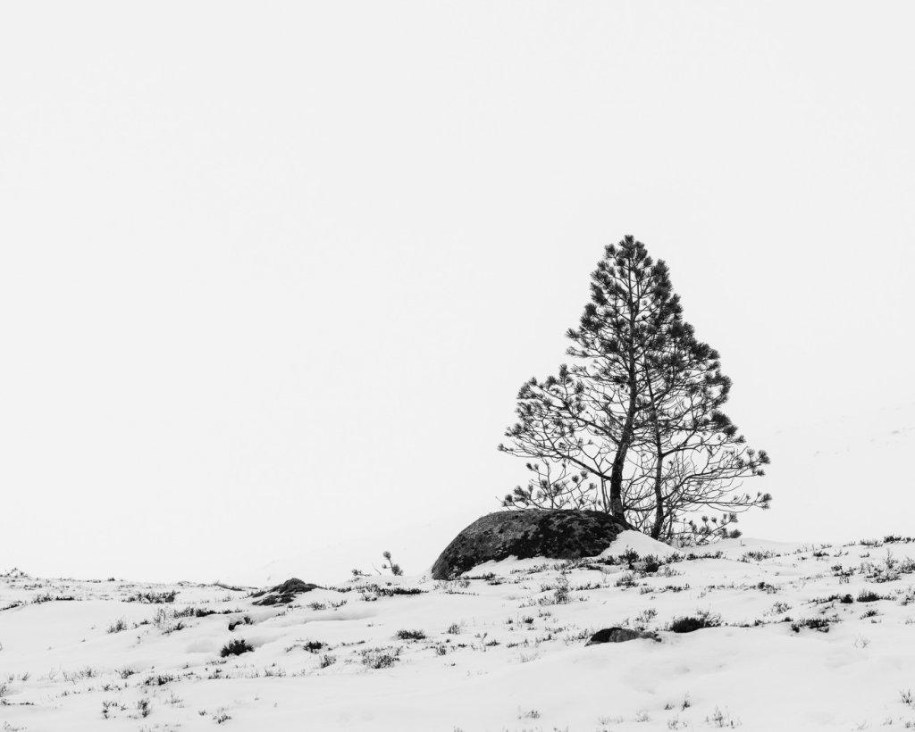 Cairngorms pine 5