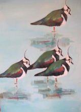 Lapwings 2