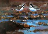 Ringed Plovers 3