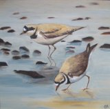 Ringed Plovers 2
