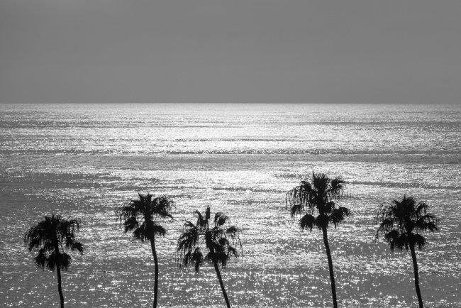 5 Palm Trees, San Diego