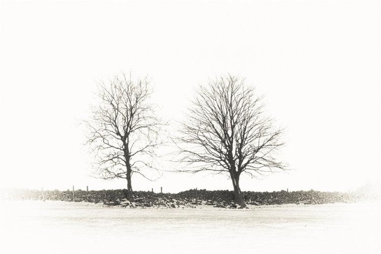 2 Trees, Dorset