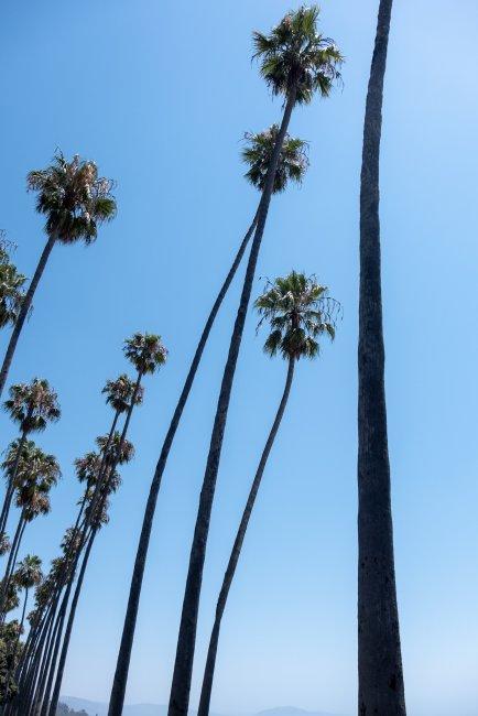 Palm Tree Row, Santa Barbara, California