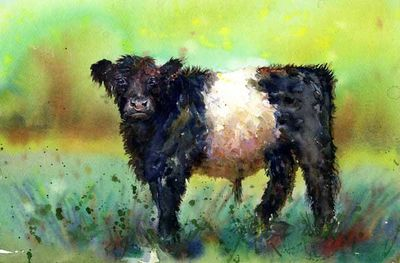 Art print with Belted galloway cow,in green field, Beltie.
