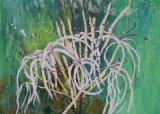 ragged lilies