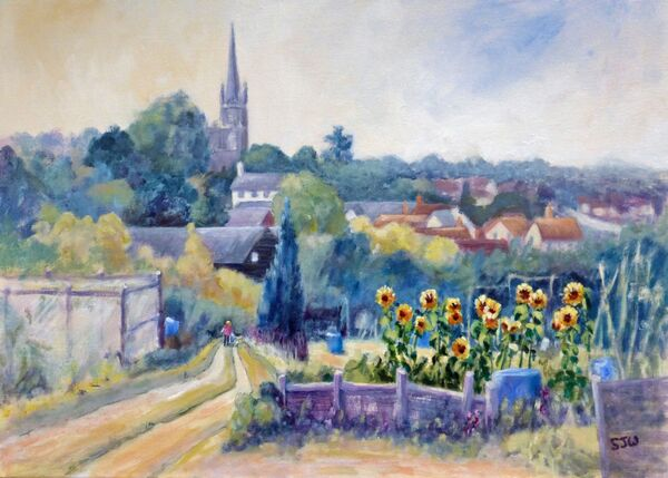 saffron walden allotments late summer