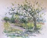 Watercolour sketch, Wimbledon Common