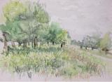 Watercolour sketch, Richmond Park