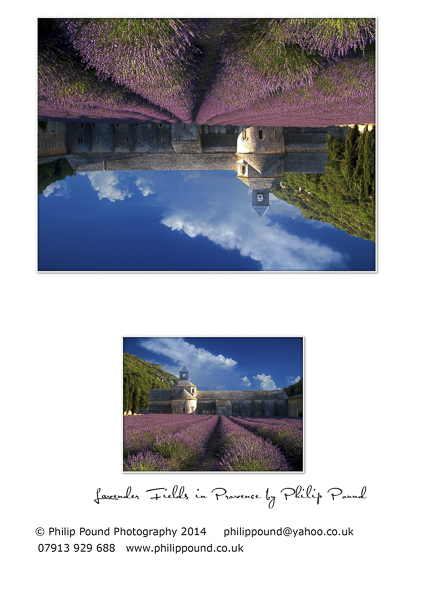 Lavender Fields Greetings Card
