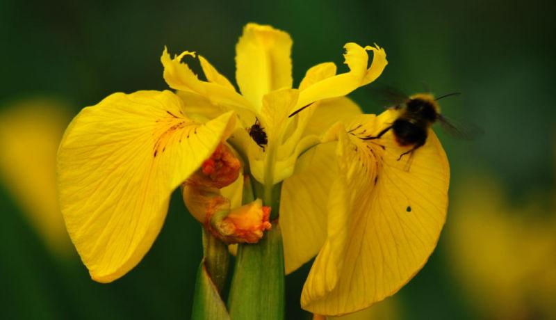 A bee flies off