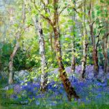 Bluebells in Silkwood sold