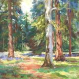 Tall Trees, Westonbirt 20 x 20cm      Sold