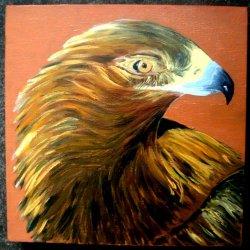 Head of Golden Eagle