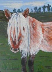 Kintail Pony.