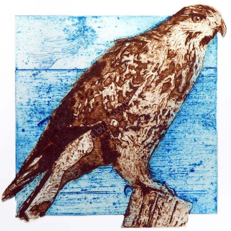 Midsummer buzzard