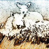 Cheviot ewe and twin lambs