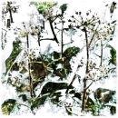 Gaelic tree alphabetg: gort: ivy