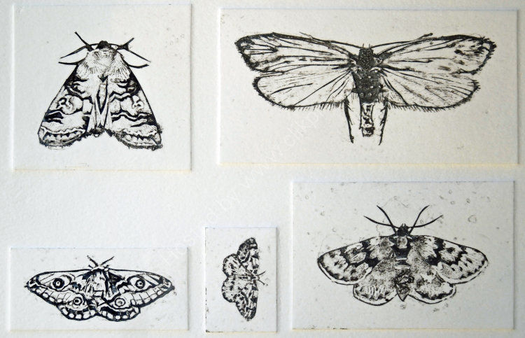 Moths of the Northern Highlands