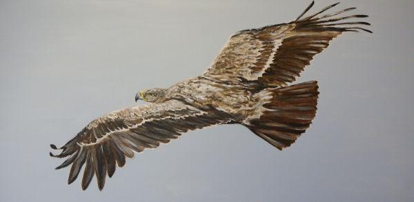 Spanish Imperial Eagle 1