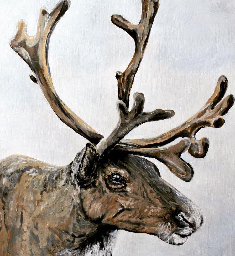 Brae the reindeer