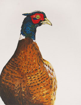'Cocky Pheasant' cards