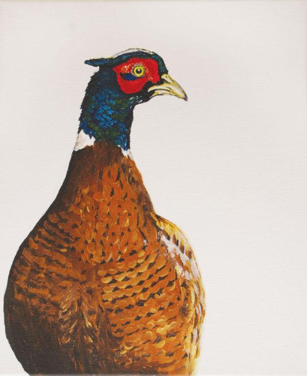 Cocky Pheasant
